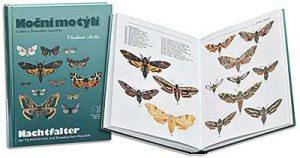 kniha Noční motýli