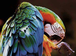 Obrázek v CMYK barevném režimu