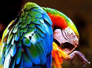 Obrázek v RGB barevném režimu